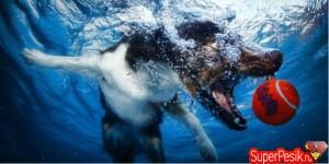 podvodnye-fotografii-sobak2