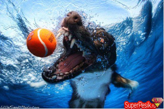 podvodnye-fotografii-sobak3