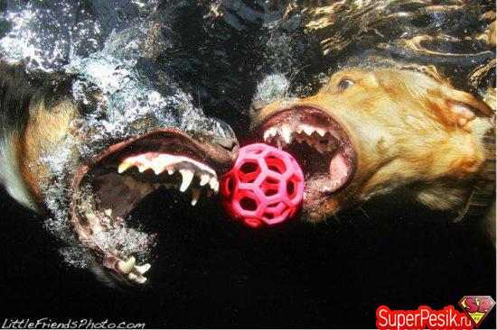 podvodnye-fotografii-sobak4