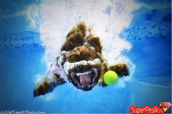 podvodnye-fotografii-sobak5
