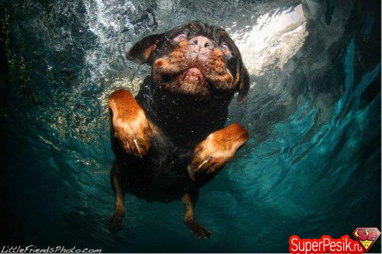 podvodnye-fotografii-sobak7