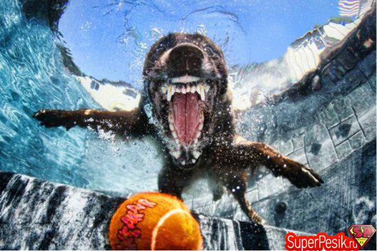 podvodnye-fotografii-sobak8