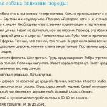 xanaanskaya-sobaka