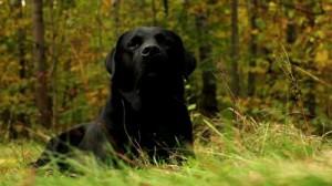 dog-forest