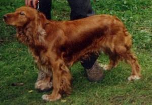Moscowdog1