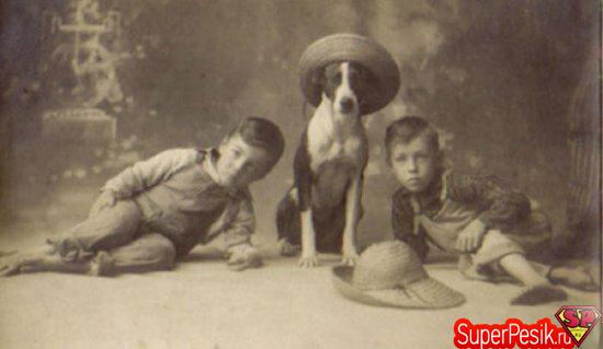 starye-fotografii-s-sobakami16