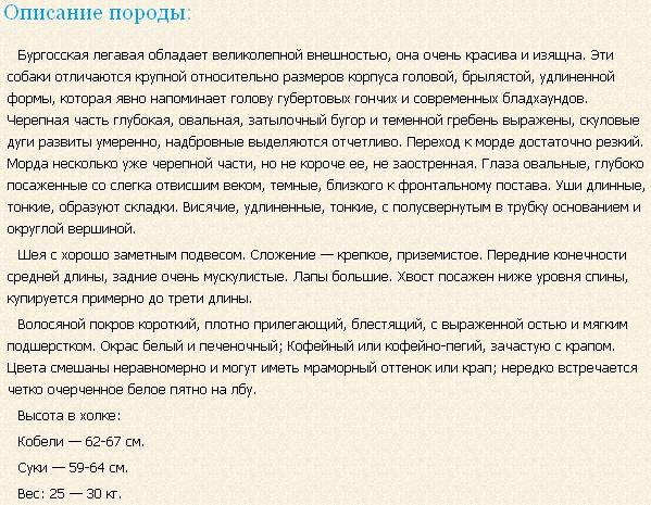 burgosskaya-legavaya