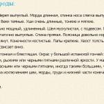 ispanskaya-gonchaya
