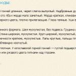 planinskaya-gonchaya-opisanie