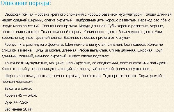 serbskaya-gonchaya