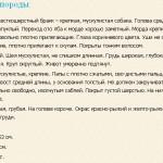 shtirijskaya-gonchaya