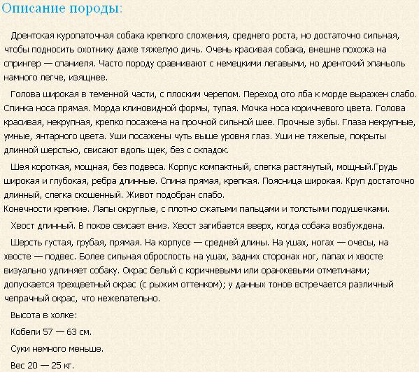 Описание породы дрентская куропаточная собака