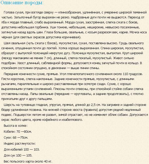 О борзых в целом    - Страница 3 Polskij-xart-opisanie
