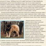 kavkazskaya-ovcharka-opisanie3