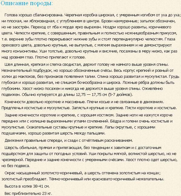 Описание породы сассекс спаниель