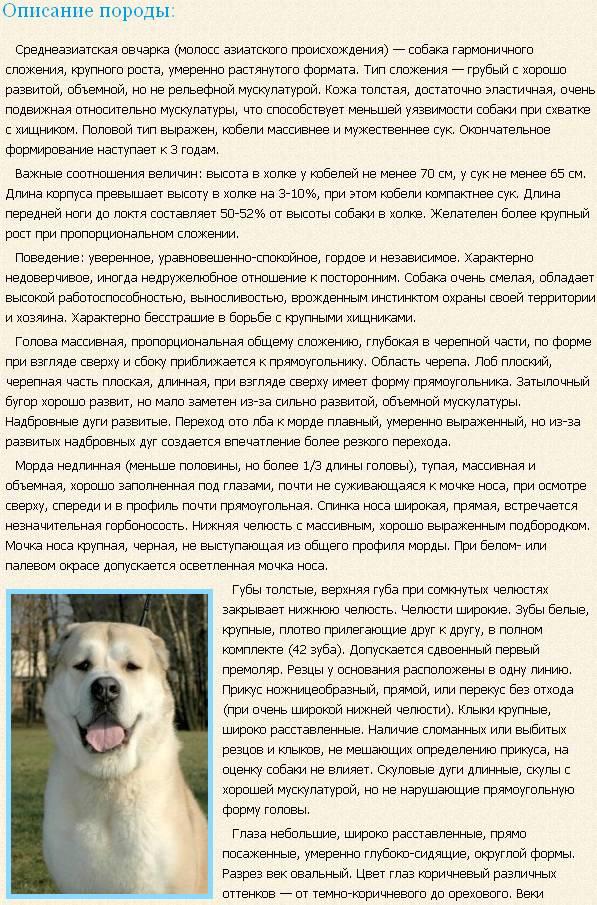 sredneaziatskaya-ovcharka-opisanie