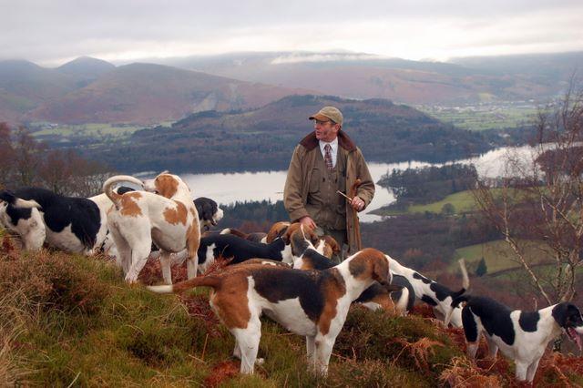 щенки собаки породы фел-хаунд