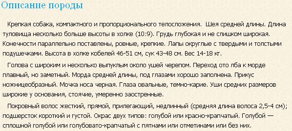 korotkoxvostyj-kettl-dog-opisanie