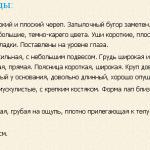 opisanie-trehzvetnaya-gonchaya