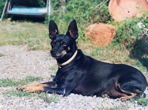 perro-ratero-malorkin1
