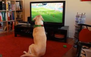 sobaka-boleet-za-portugaliyu-na-chempionate-mira-po-futbolu