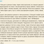 bolshaya-golubaya-gaskonskaya-gonchaya-opisanie