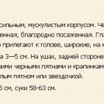 bolshoj-myunsterlender-opisanie