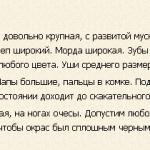 germanskaya-medvezhya-sobaka-opisanie