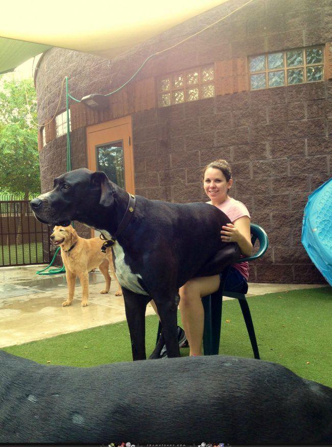 фото собаки великі