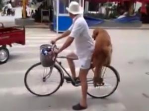 Сторож для велосипеда (Видео)